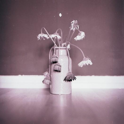 'Broken flowers'. 2017